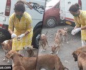 Coronavirus Pandemic: This Television actress was seen feeding stray dogs